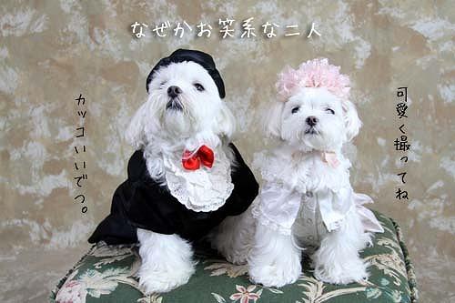 7-13-ドレスお笑い.jpg