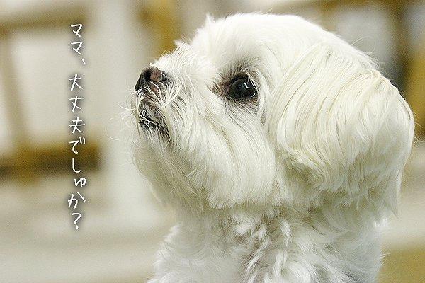 6-3-大丈夫でしゅか?.jpg
