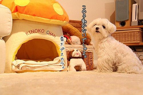 7-1-番犬.jpg