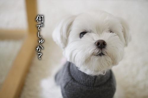 12-18-何でしゅか?.jpg