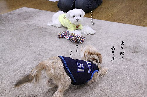 7-3-あそぼ!.jpg