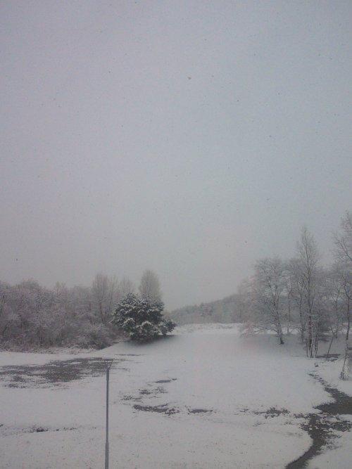 雪景色(o_ _)oバタッ