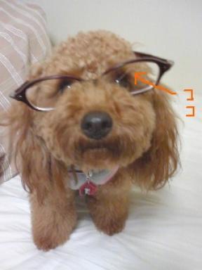 めがね犬2.jpg