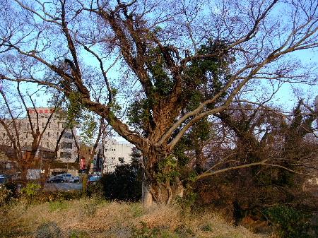 エイリアンの木