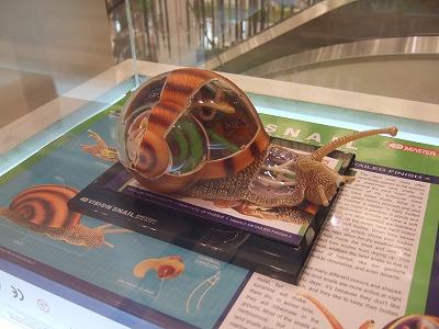 カタツムリの標本(模型)