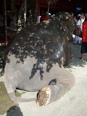 象の足の裏