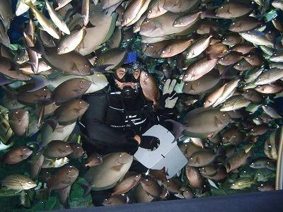 魚に囲まれたダイバー