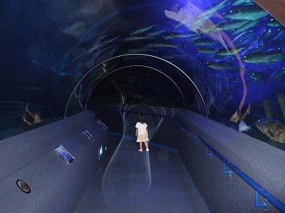 海底でひとりぼっち