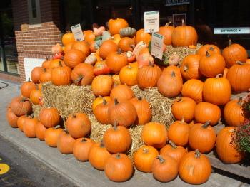 20 かぼちゃ2.jpg