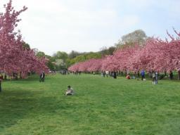 4-26 ブルックリン植物園1.jpg
