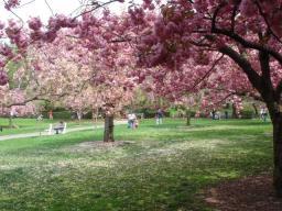 4-26 ブルックリン植物園2.jpg
