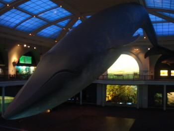 17 自然史M クジラ.jpg