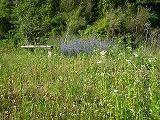 草刈前.jpg
