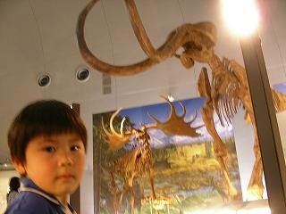 恐竜博物館あませナウマン象と