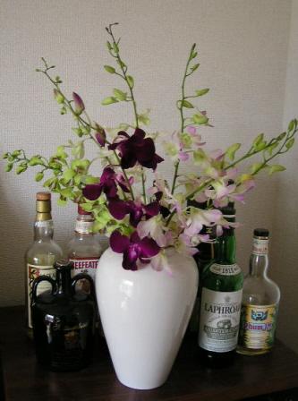 デンファレを含むランの花束・アレンジメント・蘭の鉢」