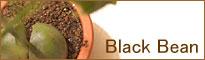 black-bean01.jpg