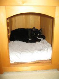 犬小屋で寝る猫