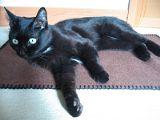黒猫モデル_ポーズ1