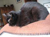 黒猫モデル_ポーズ2