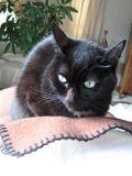 黒猫モデル_ポーズ3