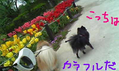 Image353.jpg