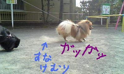 Image158.jpg