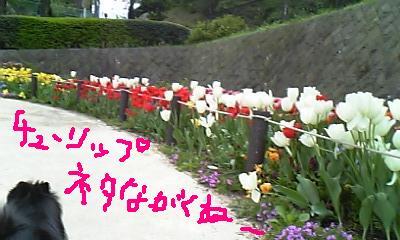 Image357.jpg