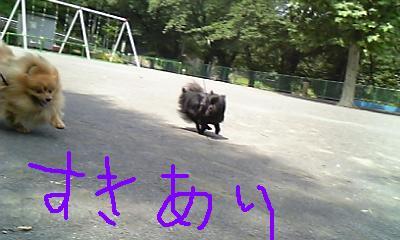 Image326.jpg