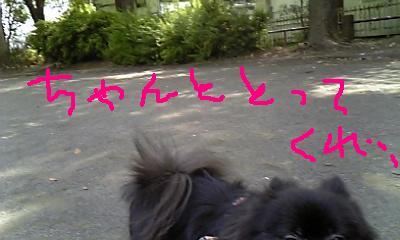 Image337.jpg