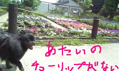 Image376.jpg