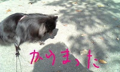 Image328.jpg