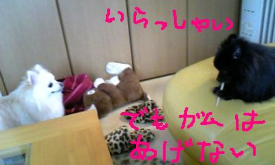 Image396.jpg