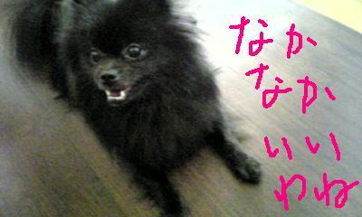 Image267.jpg