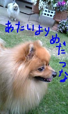 Image194.jpg