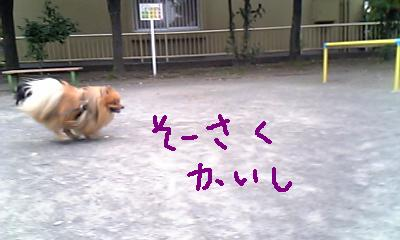 Image236.jpg
