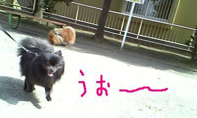 Image235.jpg