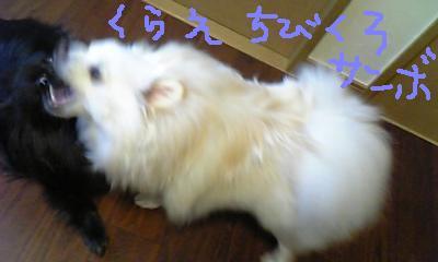 Image518.jpg