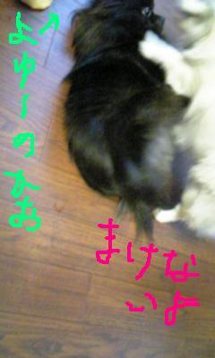 Image503.jpg