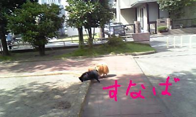 Image241.jpg
