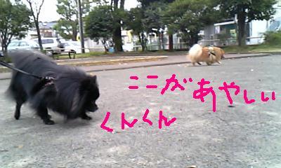 Image250.jpg