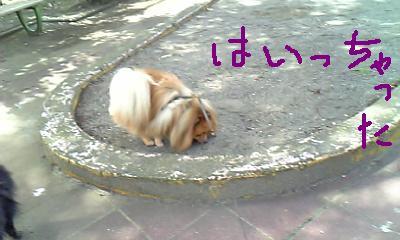 Image246.jpg