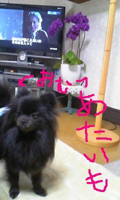Image255.jpg