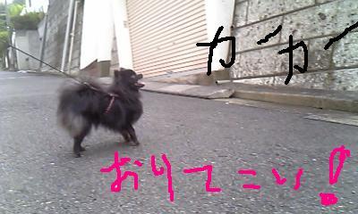 Image279.jpg