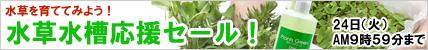 水草水槽応援セール!.jpg