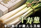 05_senjyu_win.jpg