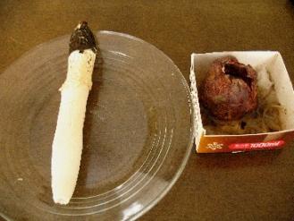 アカダマキヌガサタケと卵