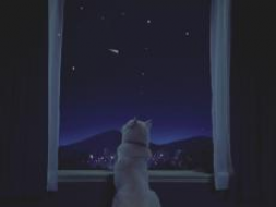 白戸家 夜空.png