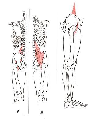 腸腰筋(ちょうようきん) 腸腰筋は腸骨筋、大腰筋、小腰筋の3つの筋肉から...  フットトレーナ