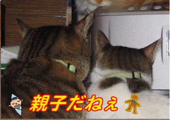新しいスケッチブック_55.jpg