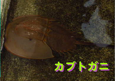 新しいスケッチブック_156.jpg